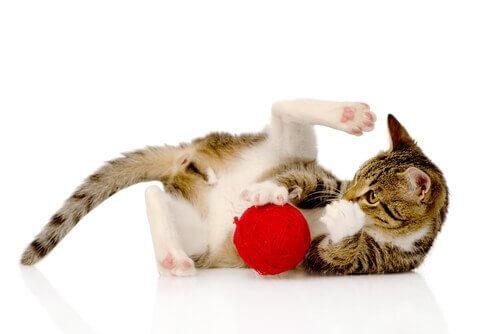 Kedilerin Zekasını Geliştiren Oyunlar