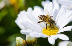 Arılar Olmasa Dünyada Yaşam Olmazdı