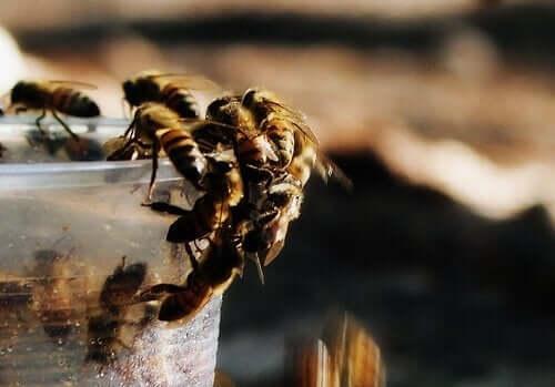 arılar plastik bardak