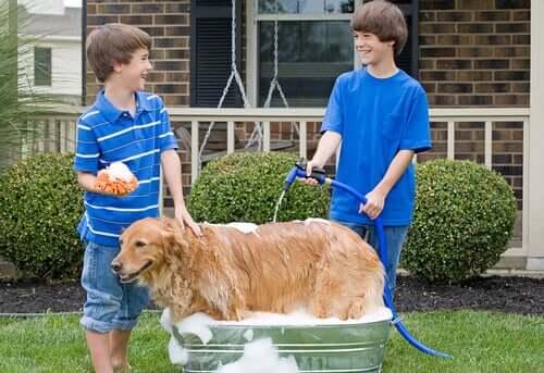 Köpeğinizi Bahçe Hortumu İle Yıkamanız İçin İpuçları