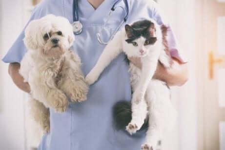 bir kedi ve bir köpek tutan veteriner