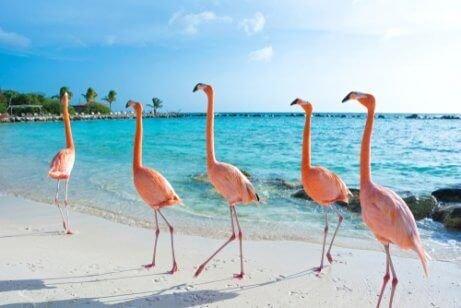 sahilde dolaşan flamingolar