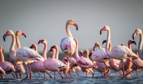 Flamingolar Hakkında Merak Edilen Gerçekler