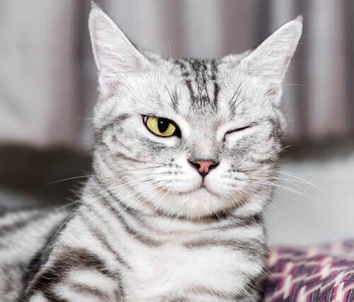 Kedilerde Göz Hastalıkları: Önlem Ve Tedavi