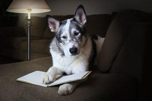 Köpeğinizin Sosyal Becerilerini Nasıl Geliştirirsiniz?