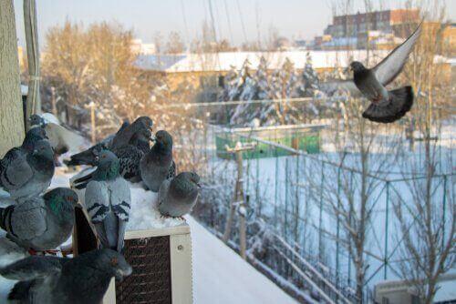 Güvercinleri Korkutmak İçin 7 Yol