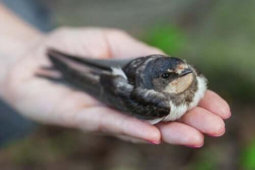 Hasta Bir Kuş Nasıl Anlaşılır?