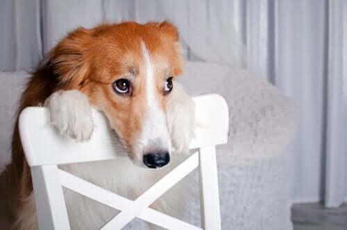 Internetteki Hayvanlara Şiddet İçerikli Videoları Nasıl Şikayet Edebilirsiniz?