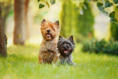 yan yana duran iki köpek