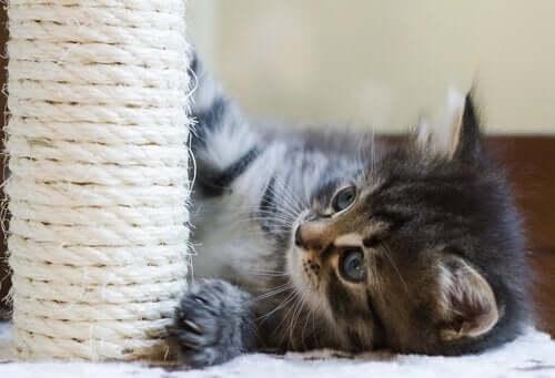kedi oyuncak