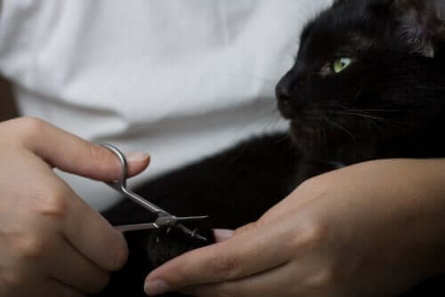kedi tırnak kesimi