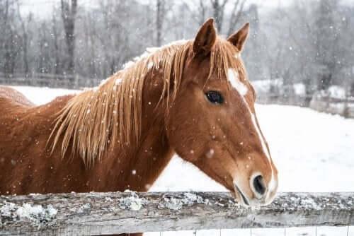 Kışın At Bakımı Nasıl Olmalı?
