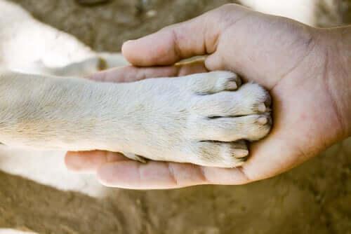 Hangi Köpek Cinsi En Güçlü Patilere Sahiptir?