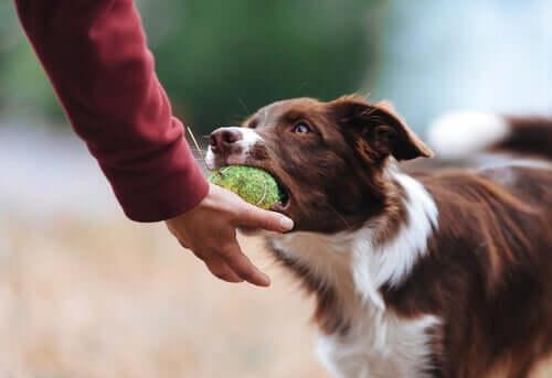 Köpeğinizin Oyuncağını Sahiplenmemesi İçin İpuçları