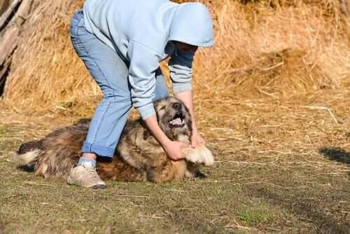 köpek ve sahibi
