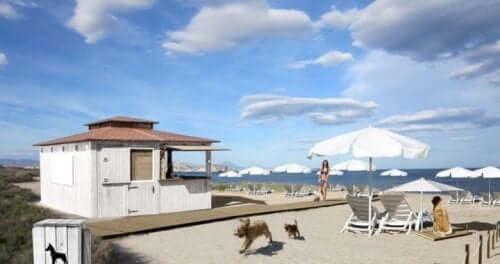 Köpekler İçin İlk Plaj Barı Açıldı