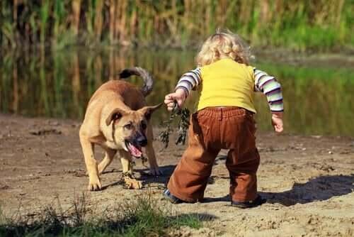 küçük çocuk köpek oyun