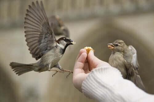 Doğru Şekilde Kuş Beslemek