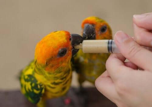kuş beslemek