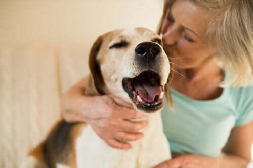mutlu köpek ve onu öpen sahibi