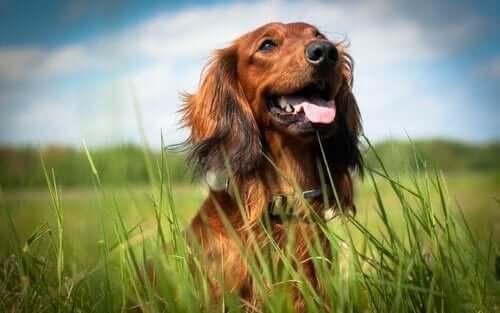 Köpeğinizin Mutlu Olduğunu Nasıl Anlayabilirsiniz?