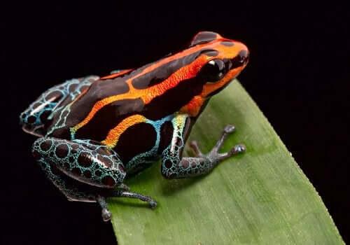 Hayvanlarda Aposematizm Nedir?