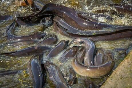 sudaki yılanlar