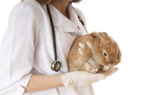 doktor ve tavşan