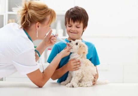 antibiyotik vermek