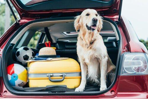 Köpeğinizle Tatile Çıkma Sanatı