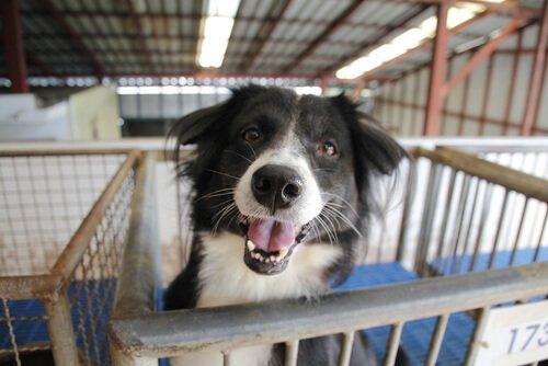 Terk Edilmiş Bir Köpek Sahiplenmek