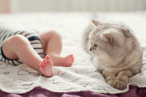 uyuyan bebek ve ona bakan kedi
