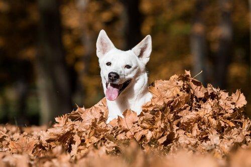 yapraklar arasından çıkan beyaz köpek