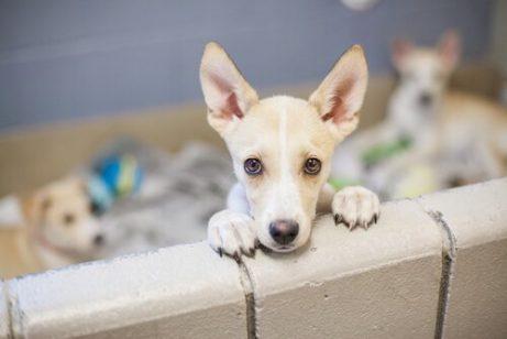 üzgün görünen yavru köpek