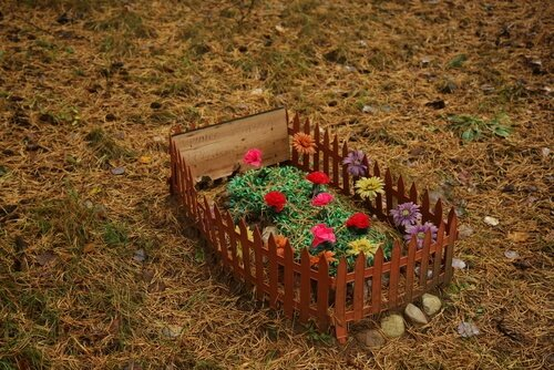 Ölen Evcil Hayvan Nereye Gömülmeli?