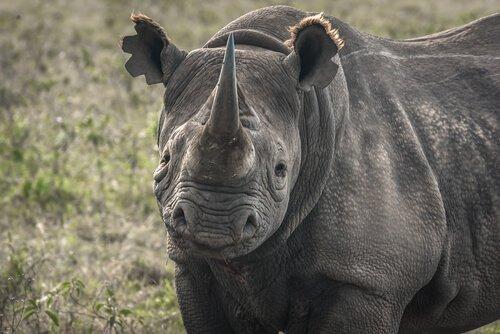 Tehlike Altındaki Hayvanlar: Yok Olacak 5 Tür
