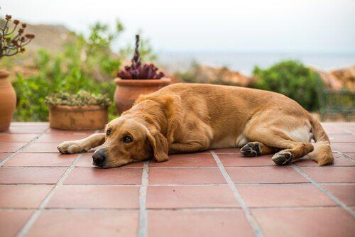 küçük sağlık sorunları yaşayan köpek