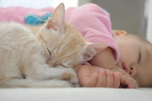 uyuyan kedi ve bebek