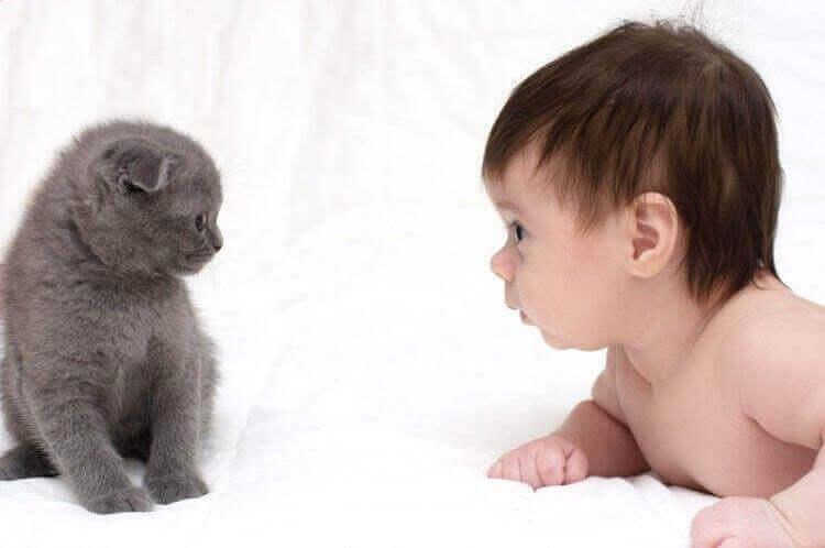 İlginç Bir Soru: Kediler bebeklerle iyi midir?
