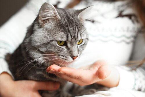 sevilen kedi