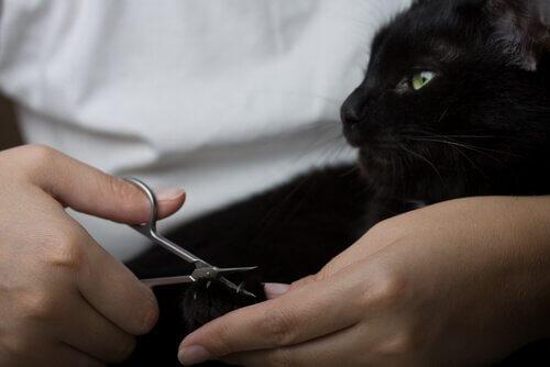 tırnakları kesilen kedi