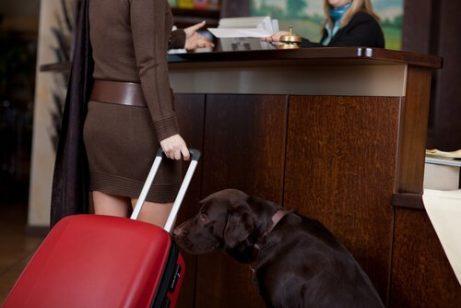 seyahat eden kadın ve köpek