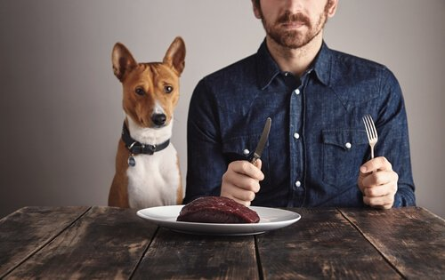 Köpekler için Proteinin Önemi