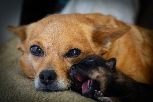 anne köpek ve yavrusu