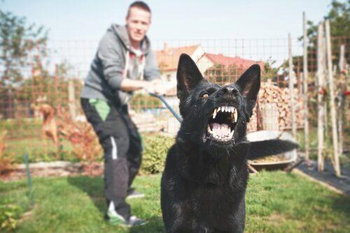 Köpekler Korkunun Kokusunu Alabilir mi?