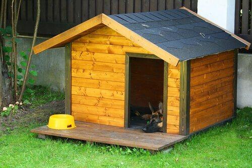 Köpek Kulübesini Süslemek için 5 İpucu