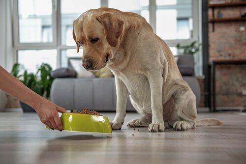 Köpekler için Tahılsız Mamalar