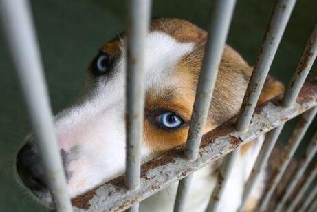 terk edilmiş bir köpek