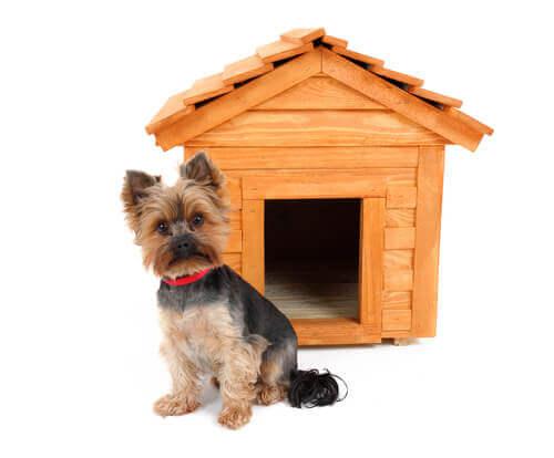 tahtadan köpek kulübesi
