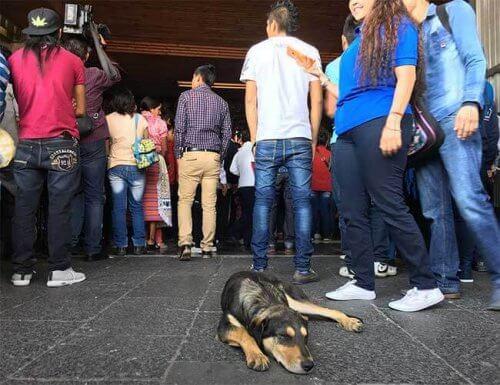 Guadalupe Bazilikası 'nda Terk Edilmiş Sokak Köpekleri